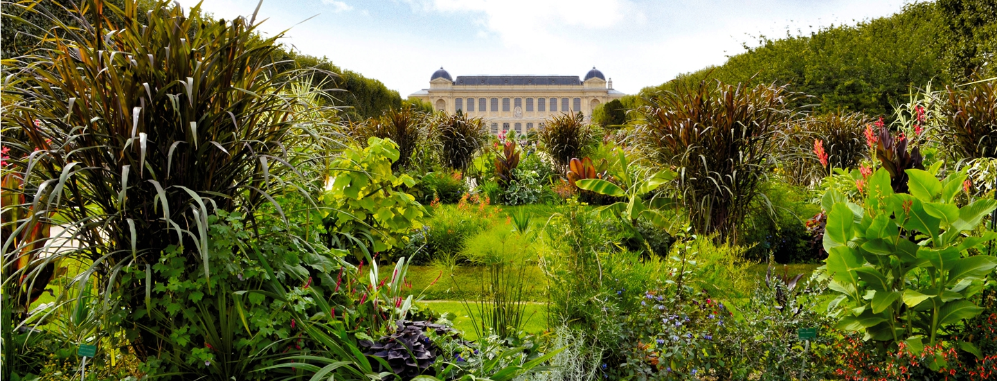 Jardin des plantes expresso paris for Jardin jardin paris